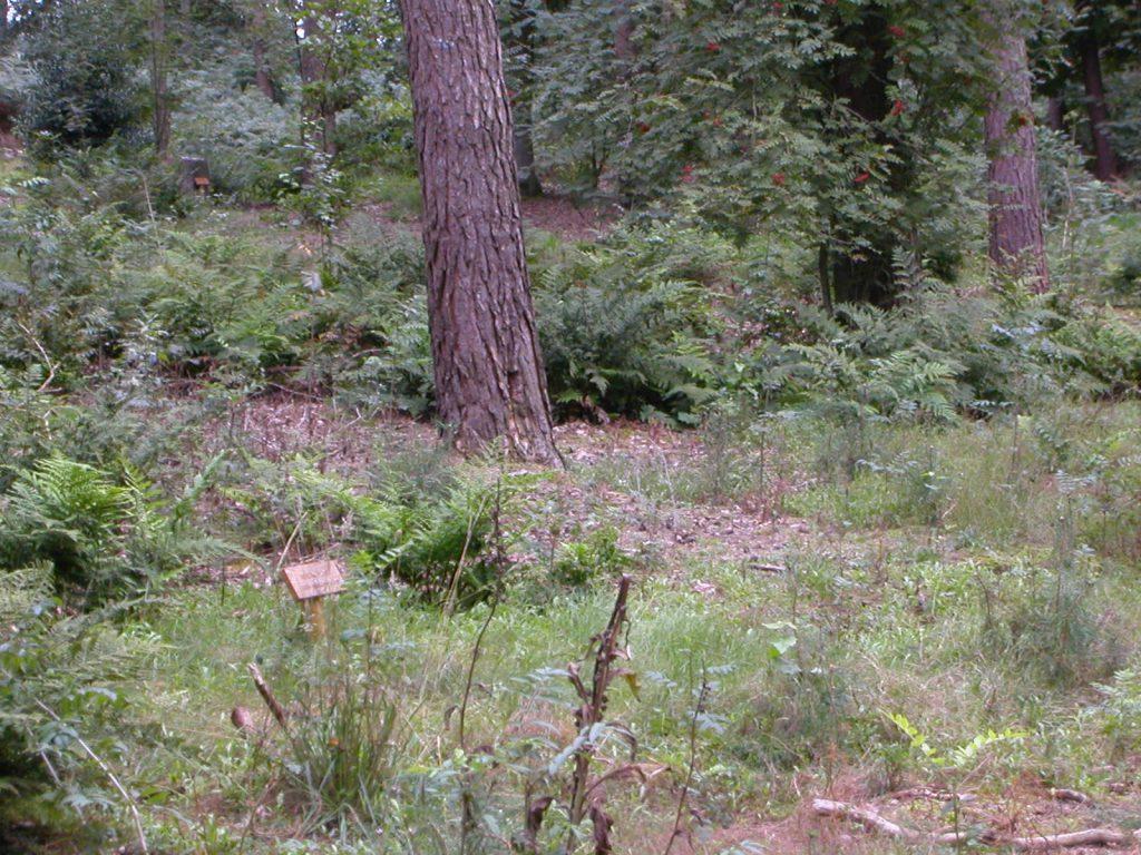 Groene begrafenis: graf op natuurbegraafplaats