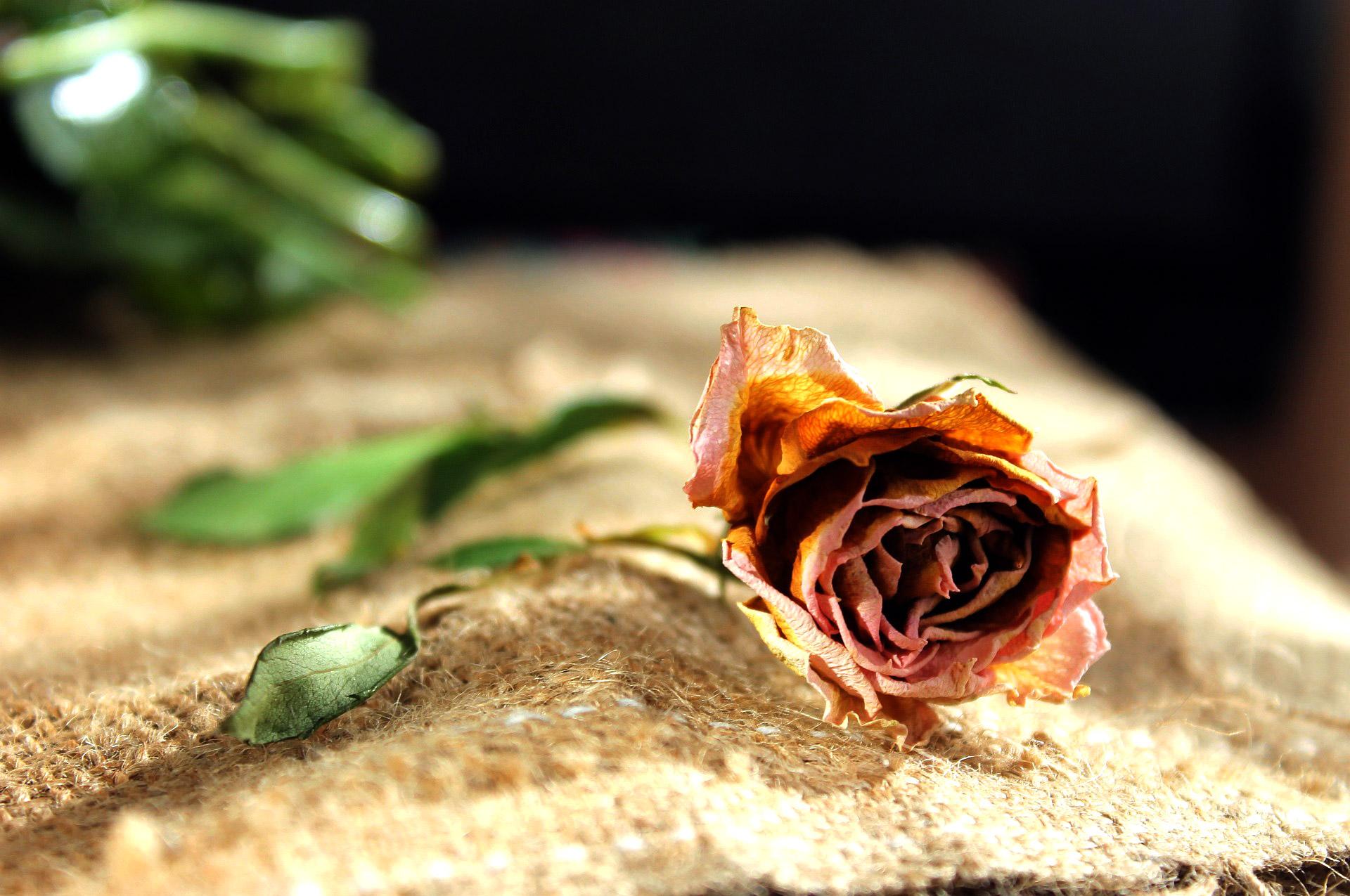 Duurzaam Einde ouderen ongeneeslijk ziek overlijden